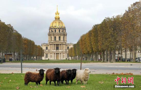 Paris uses sheep as eco-friendly lawn mowers